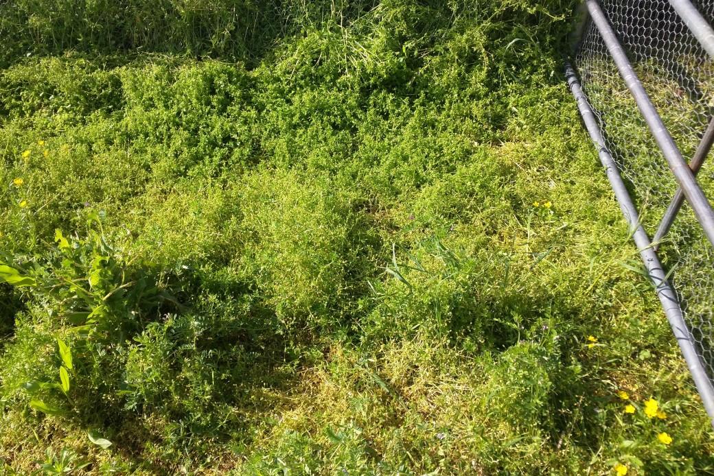 Grass before ducks