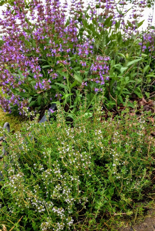 Thyme and Sage